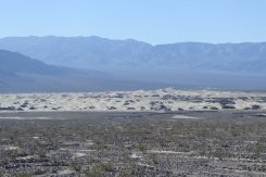 Mesquite sand dunes from afar