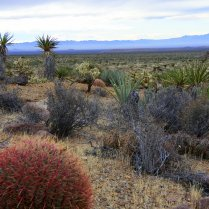 Mojave National Monument