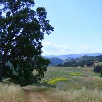 Diablo Valley